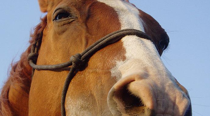 ana-korgan-riding20-horse