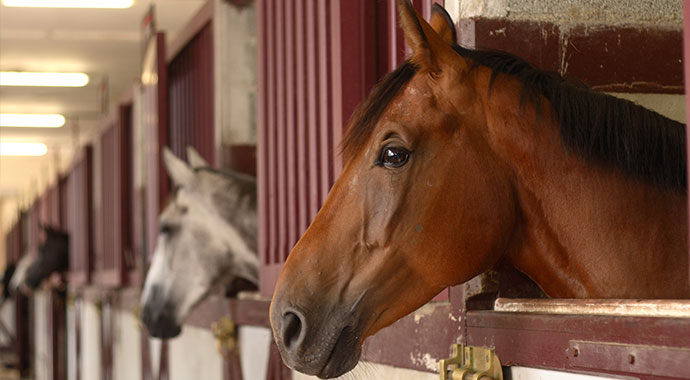 horses-stalled-in-a-row