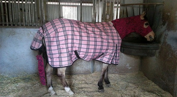 Horse-Blanketing-In-San-Luis-Obispo-Part-3