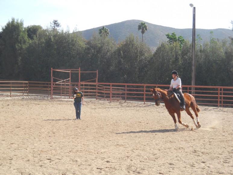 cal-poly-equestrian-team-1