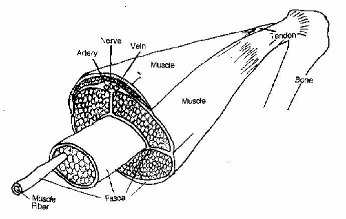 horse-diagram