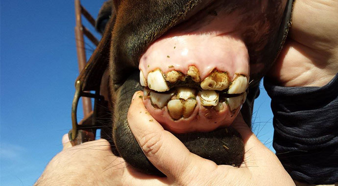 Smile! An In-Depth Look Into Your Horse's Mouth - Part 1 | SLO Horse News