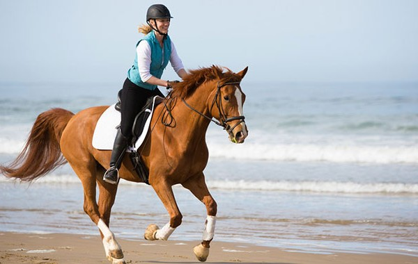 American Warmblood Dharma beach gallop