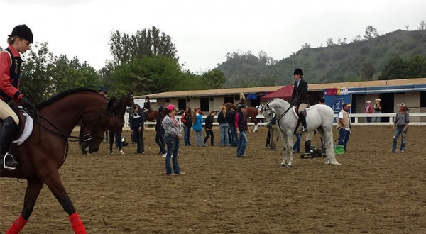 Spring Arabian Horse Show