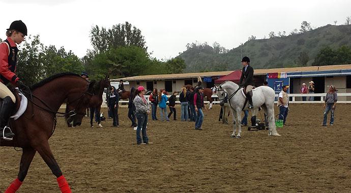 Spring Arabian Horse Show Los Angeles Equestrian