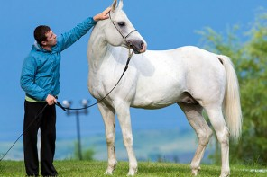 Breeding For Blood – Horse Breeding For Appearance