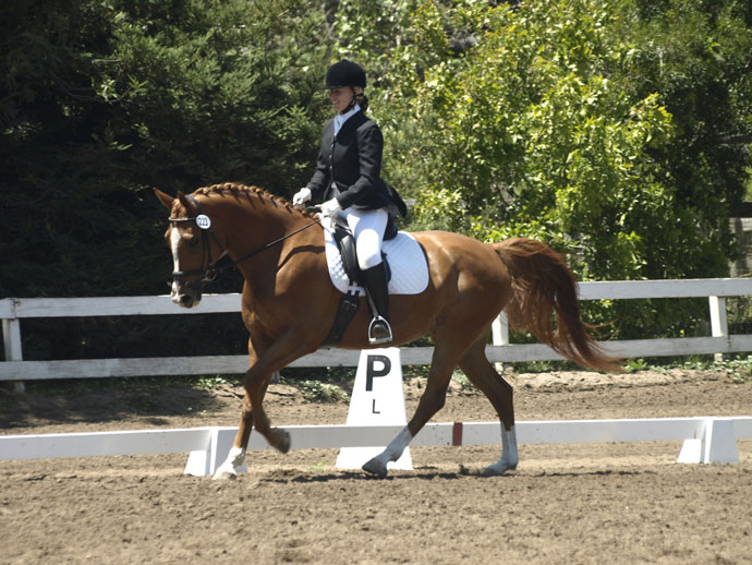 American Warmblood Dharma Dressage Canter