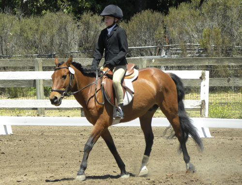 What Is Dressage? | SLO Horse News