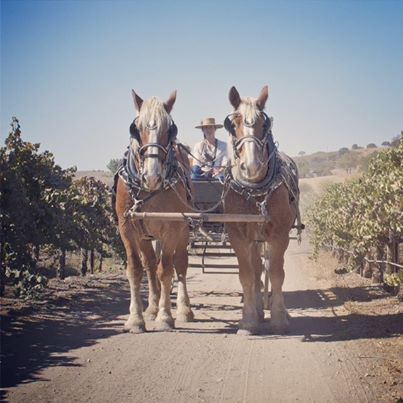Outback Trail Rides Vineyard Wagon Ride