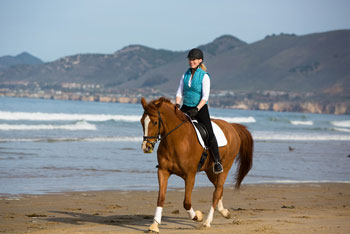 American Warmblood Dharma Beach Ride