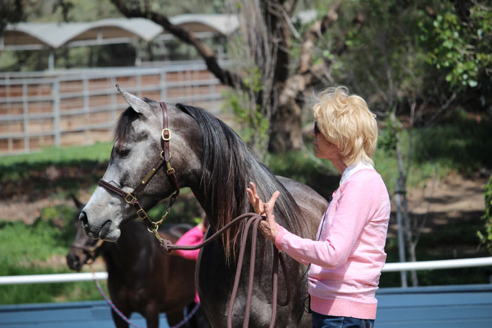 Varian Arabians Hands On Clinic - Sheila Varian Teaching