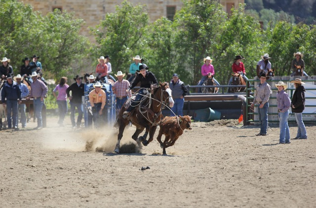 Shaley Stickler Roping A Cow