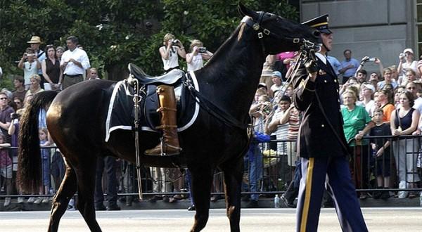 Memorial Riderless Horse