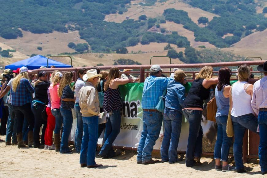 Cal Poly Performance Horse Sale - Spectators