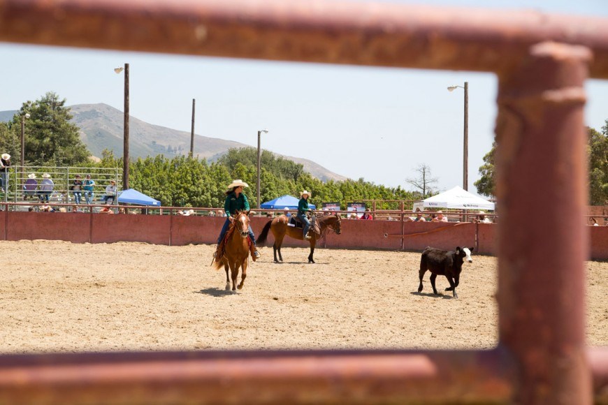 Cal Poly Performance Horse Sale - Working Cattle