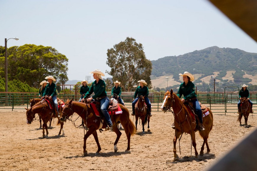 Cal Poly Performance Horse Sale - Horses Working