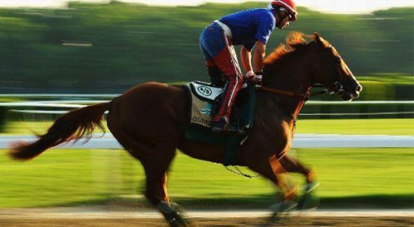 California Chrome Running