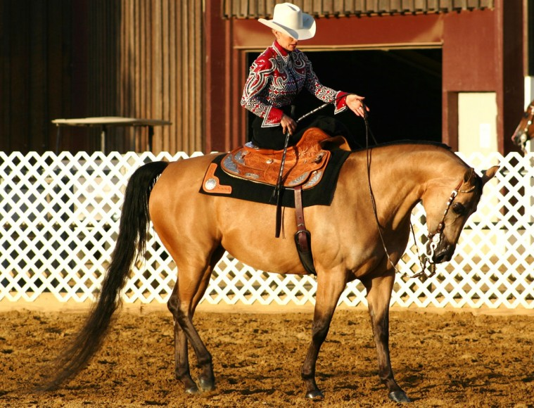 Region 2 Championship Arabian Horse Show Western Pleasure
