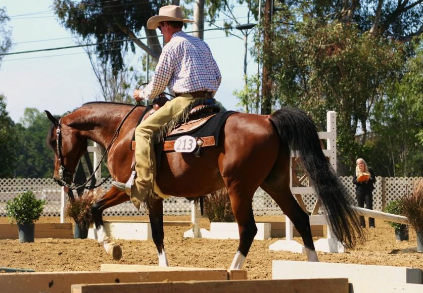 Region 2 Championship Arabian Horse Show Western