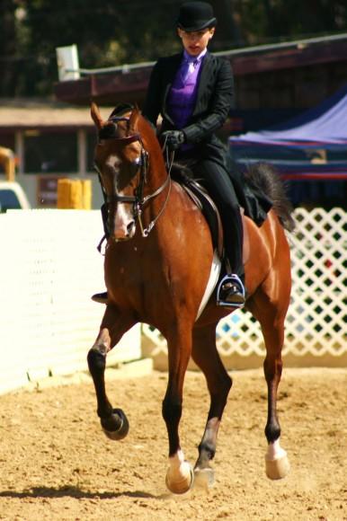Region 2 Championship Arabian Horse Show English