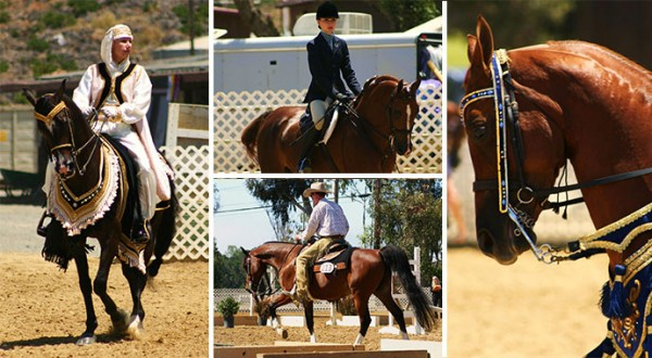 Region 2 Arabian Horse Show