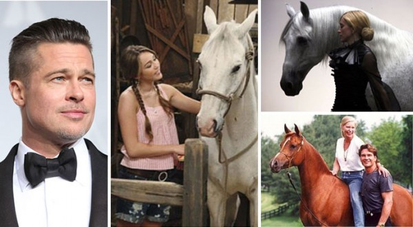 celebrity-horses-main