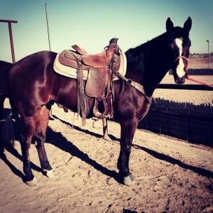 Annie Spurr Horse