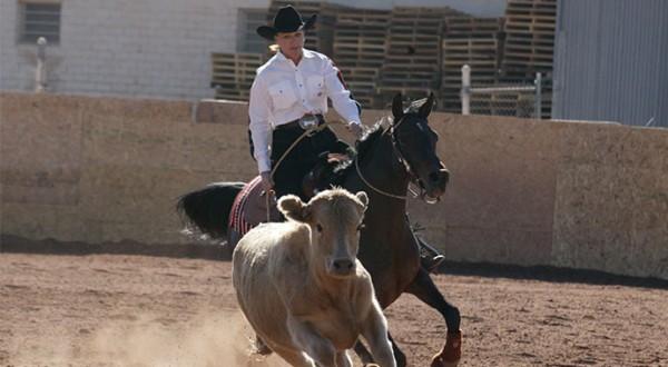Melanie Davis Cow Work
