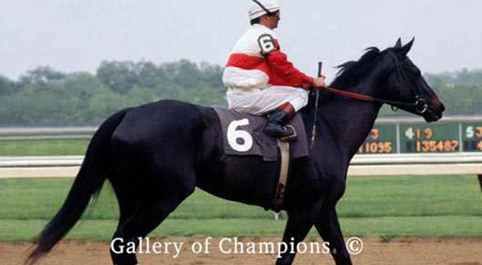 Remembering Ruffian - Queen Of The Fillies | SLO Horse News