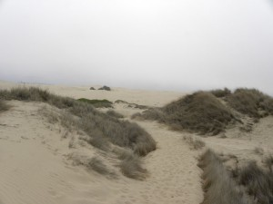 Trail-out-to-the-dunes