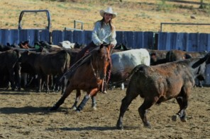 Windy Mathews – Seeking Out Good Teachers and Great Horses