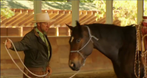 Buck Brannaman and Horse