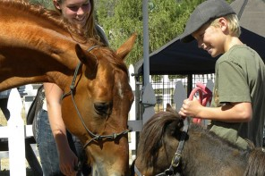 Equine Alliance Youth Foundation Showcases Healing Horses and Kids