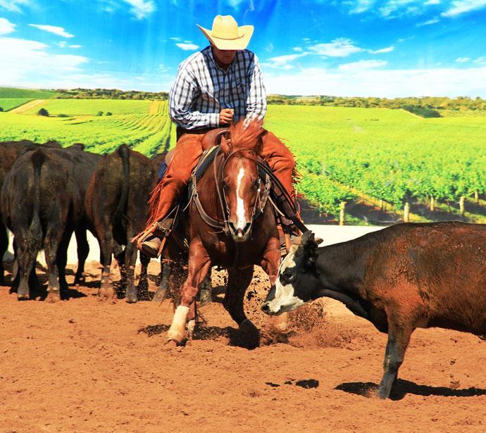 Madonna-Cattle-Cutting