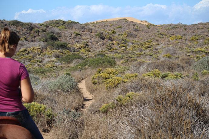 Nikki Egyed and OTTB Flying Cayman | Dune Trail, Montana de Oro, Los Osos, CA