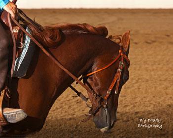 Marissa Greenberg Cowhorse