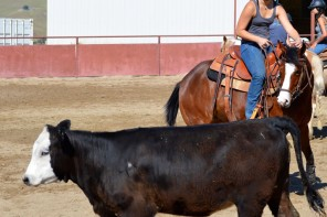 """Learn by Doing"" Cal Poly's Quarter Horse Enterprise Project"