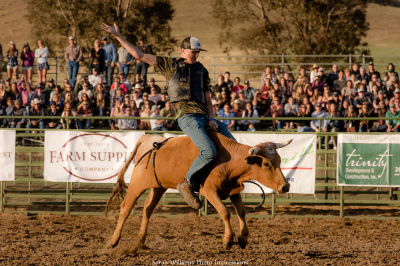 Steer Riding Learn By Doing