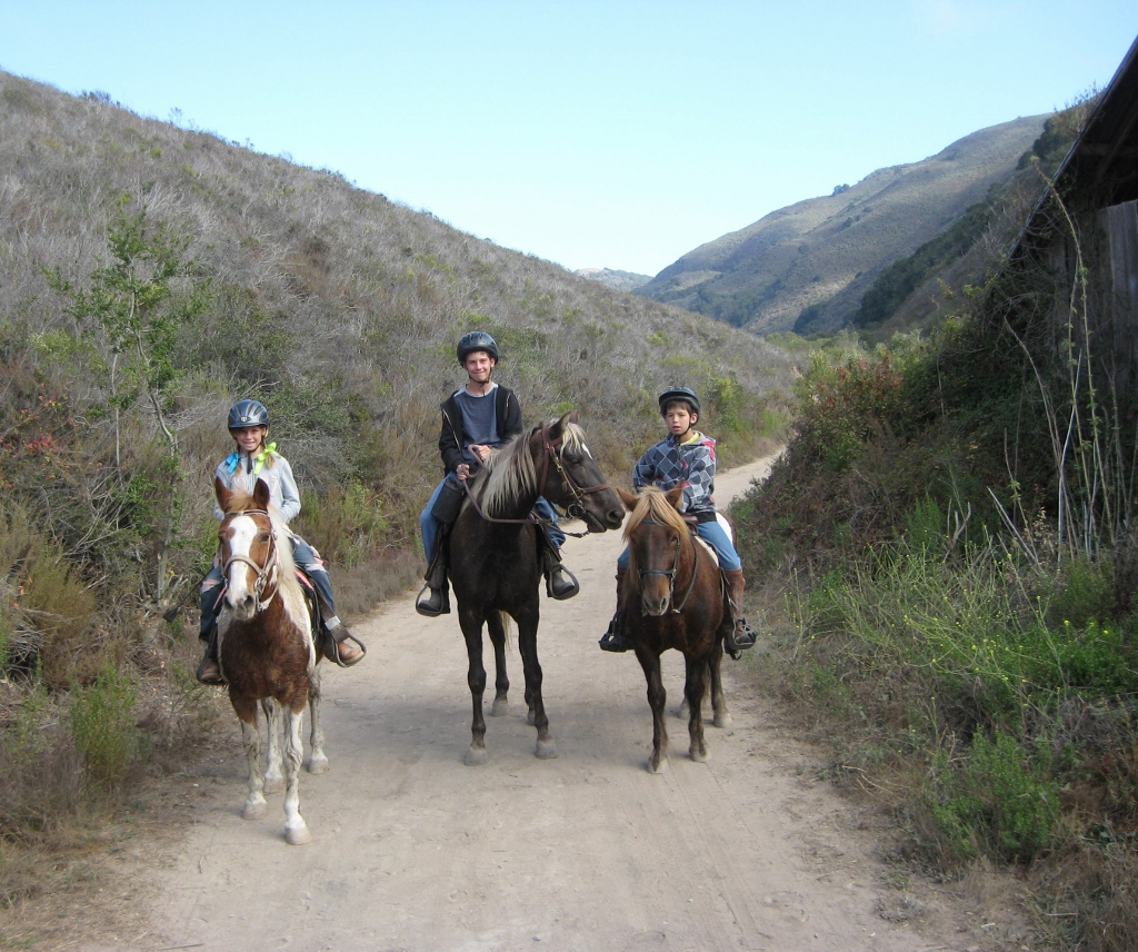 Horse Camping In And From Slo County Beneath Clear Blue