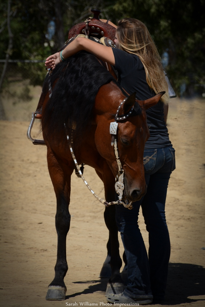 Communicating With The Arabian Horse Slo Horse News