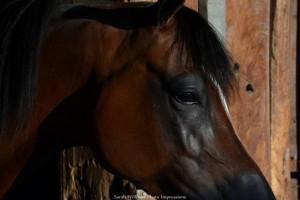 In the Barn Headshot (1024x683)
