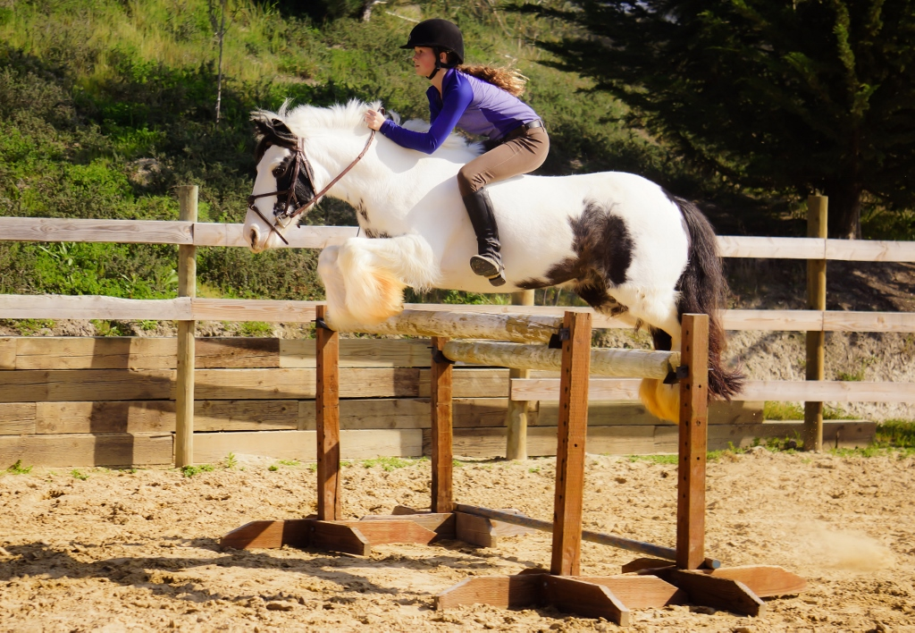 The Gypsy Vanner A Colorful History Slo Horse News