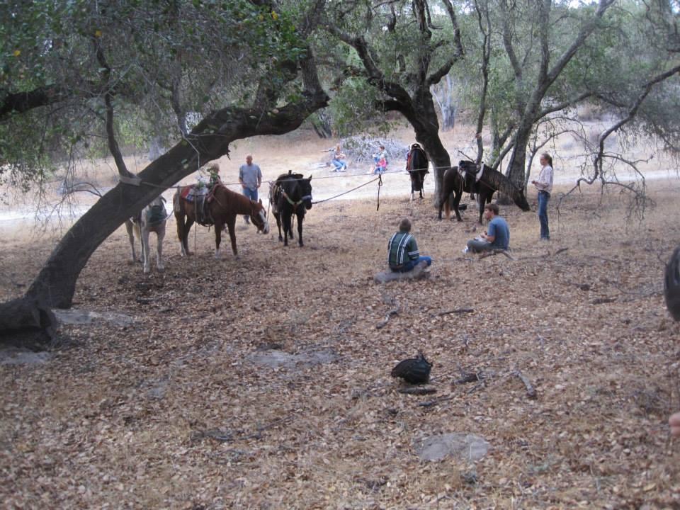 Horse Camping High Ties