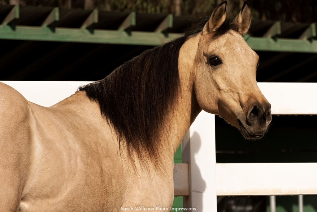 5 Things that Drive Horse People Nuts at the Barn | SLO Horse News