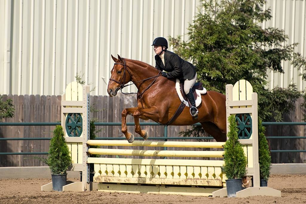 CTR House of Fortuney ridden by Karley, adopted from CANTER, also boarded and trained at the Equine Center.