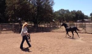 Tara equus coaching (320x189)