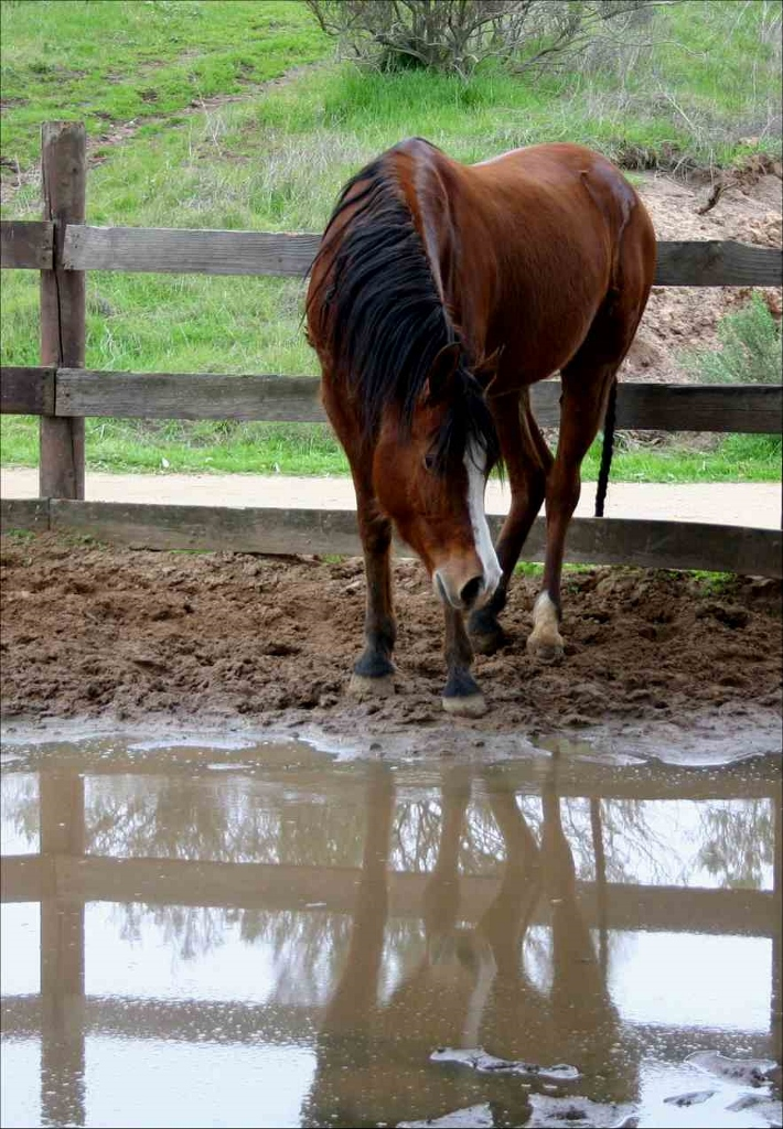 Rainy Day Actvity Ideas for Getting Your Horse Out   SLO Horse News