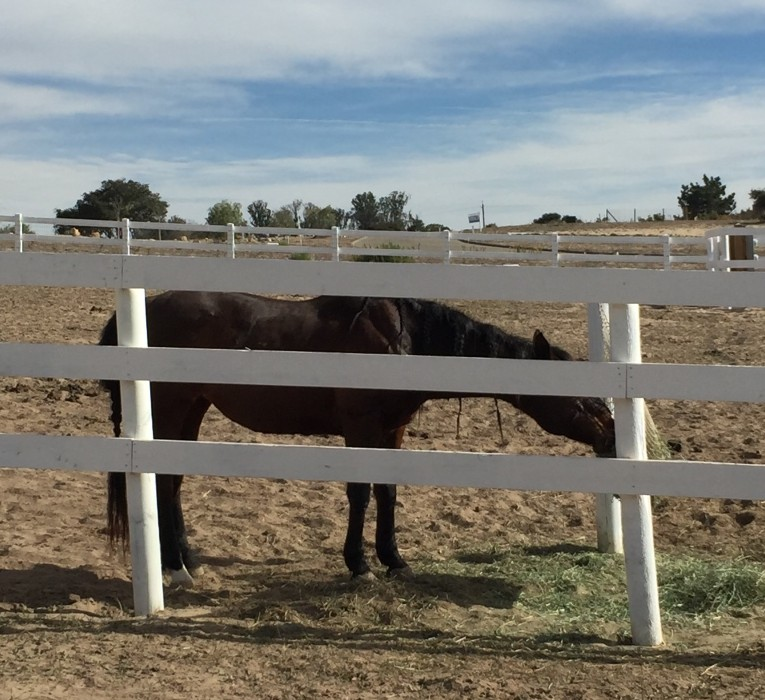 Feeding Horses is an Art . . . and a Science | SLO Horse News