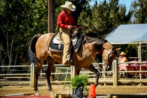 Trail Horse Class (1024x683)