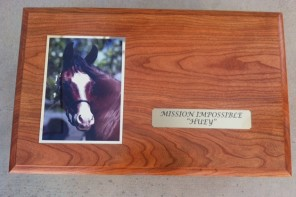 Bringing Your Horse Home . . . Forever
